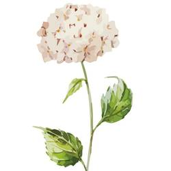 White hydrangea art print by Gallerist