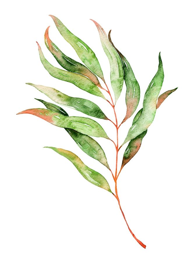 Hot red shade on  green leaf