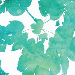 Shade of green leaf  art print by Gallerist