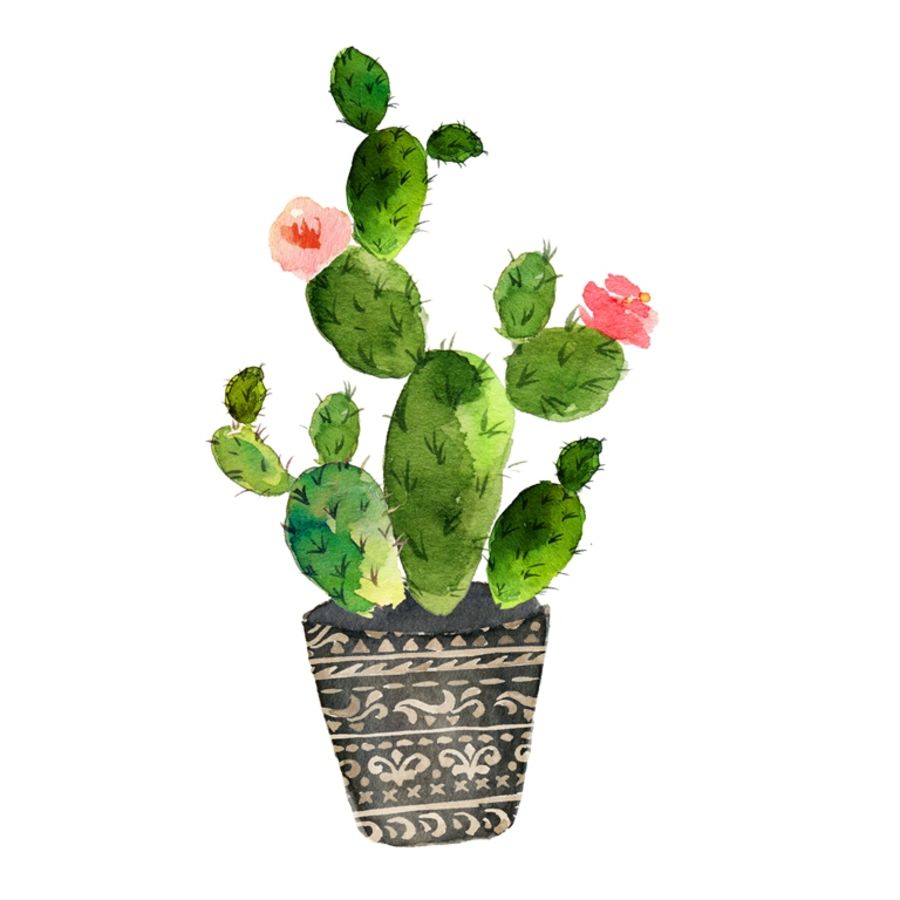 Pink glossy flower with green cactus