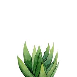 Aloe Vera green plant  art print by Gallerist