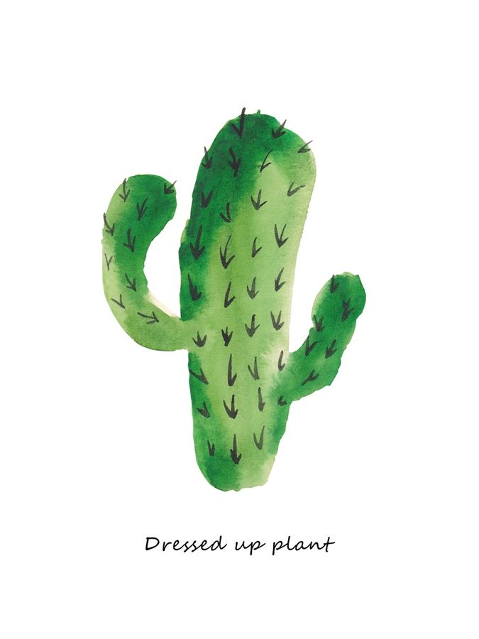 Dress up plant cactus