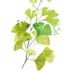 Leaf with light green colour  art print by Gallerist
