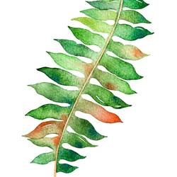 Green leaf with red shade  art print by Gallerist