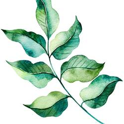 Green leaf with light and dark shade  art print by Gallerist