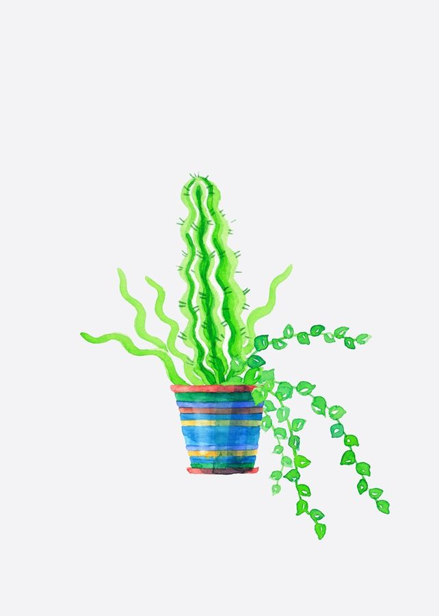 Cactus with small leaf
