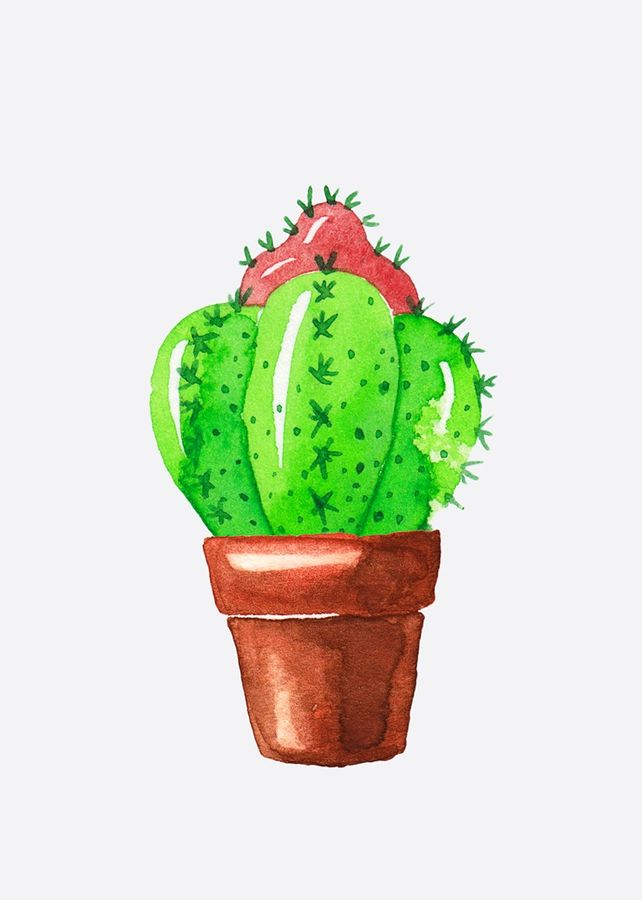 Green cactus with red cactus