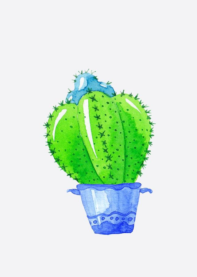 Blue and green cactus
