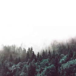 Green forest in fog  art print by Gallerist