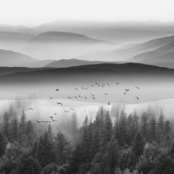 Full mountain covered with fog and tree  art print by Gallerist