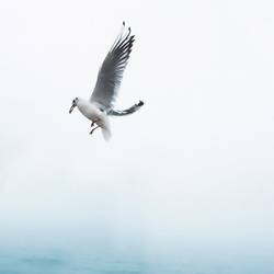 Flying white bird  art print by Gallerist