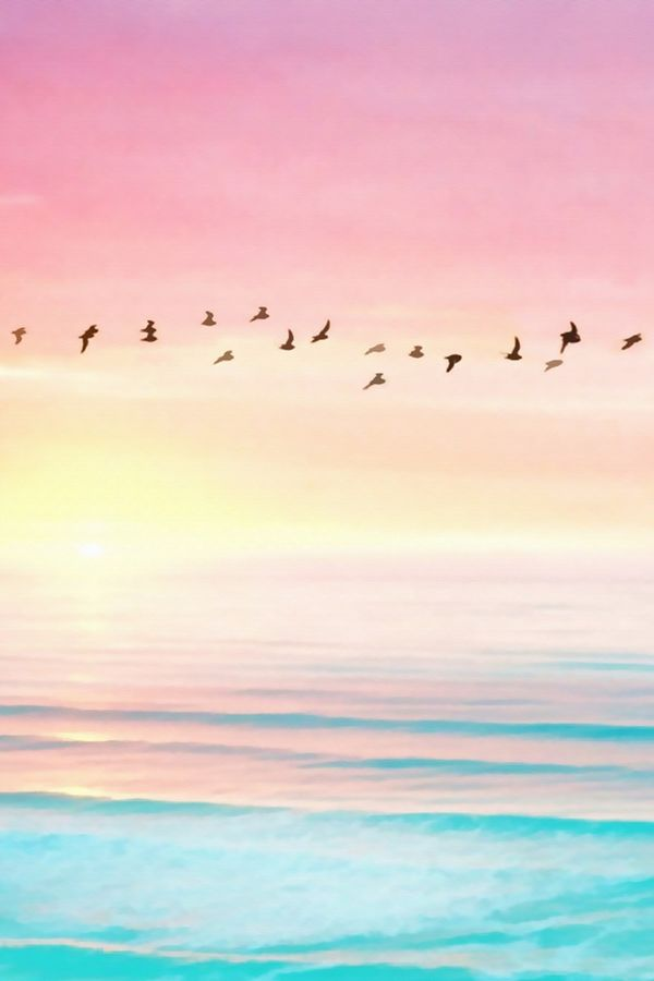 Bird flying  over the beautiful sea water