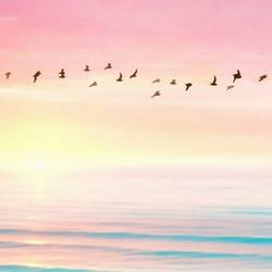 Bird flying  over the beautiful sea water  art print by Gallerist