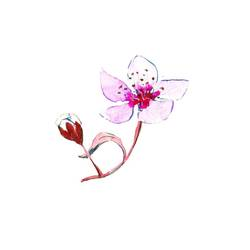 Pink flower with small flower  art print by Gallerist