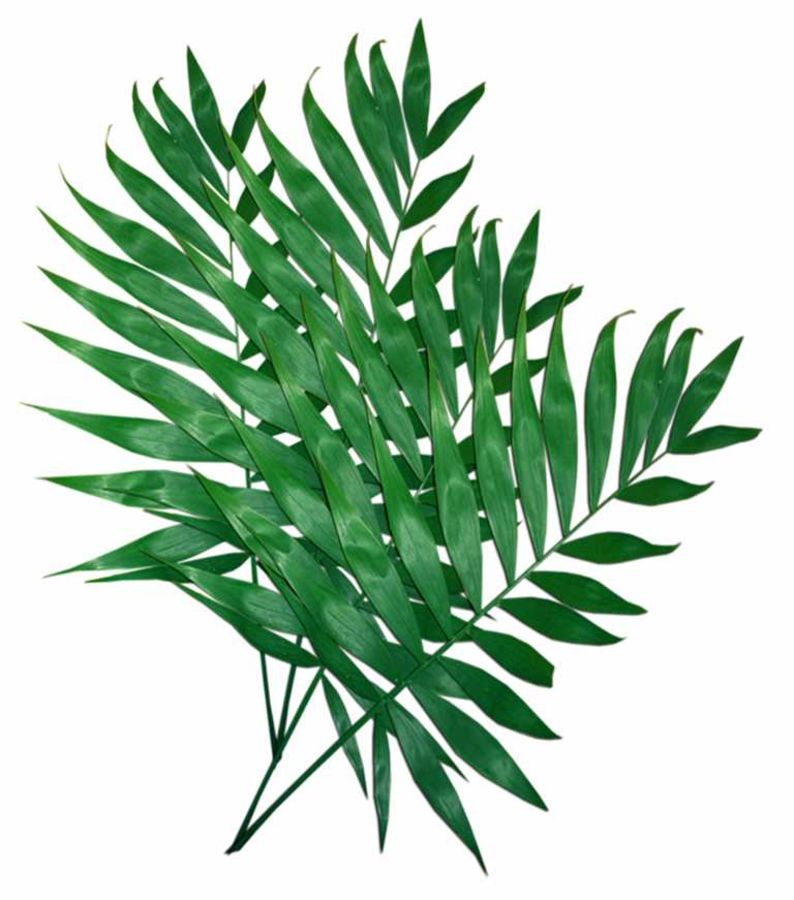 Dark colour green leaf