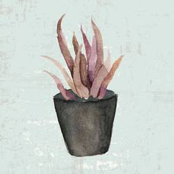 Pink aloe Vera art print by Gallerist
