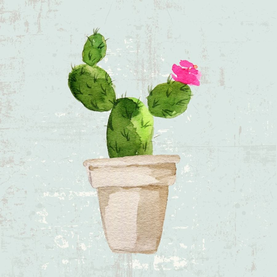 Green cactus with small pink flower