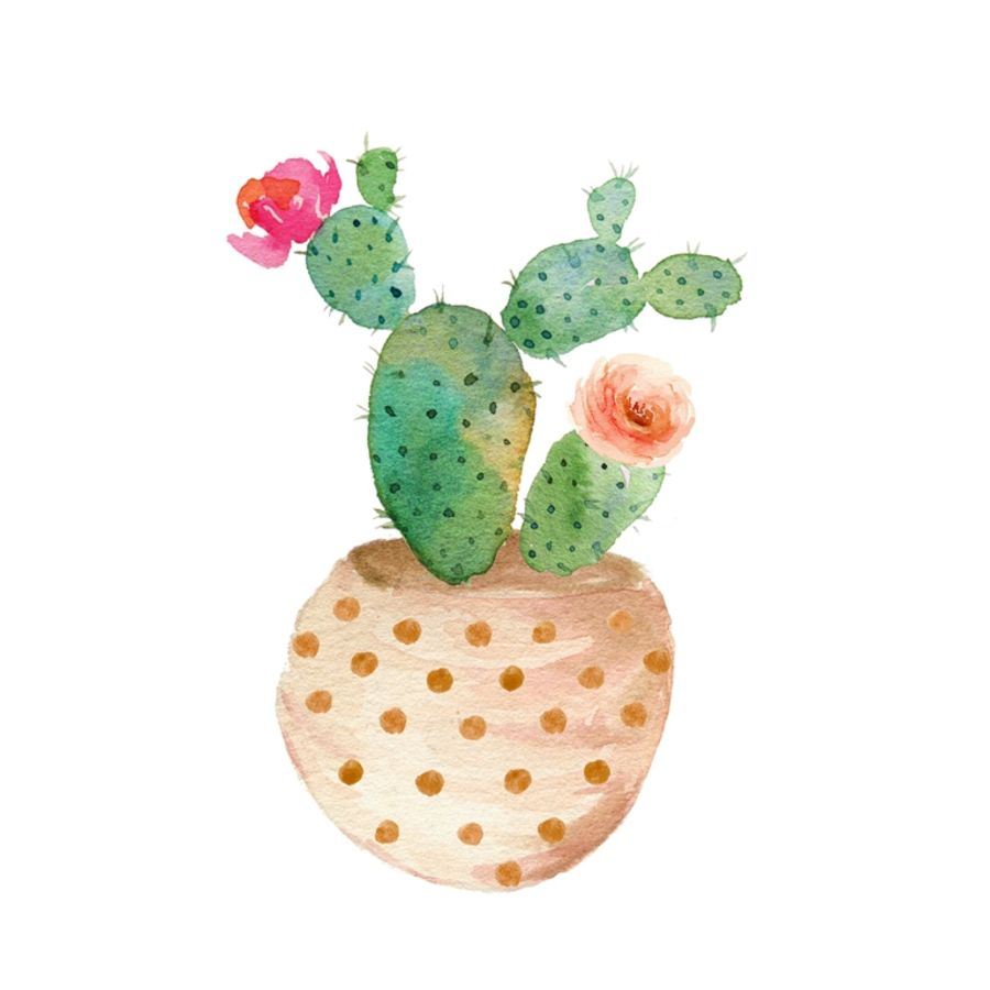 Cactus with tow flower