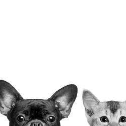 Dog with cat  art print by Gallerist