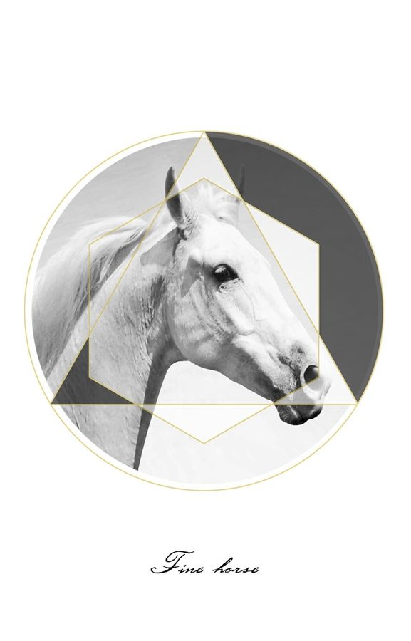 Face of a white horse