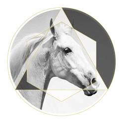 Face of a white horse  art print by Gallerist