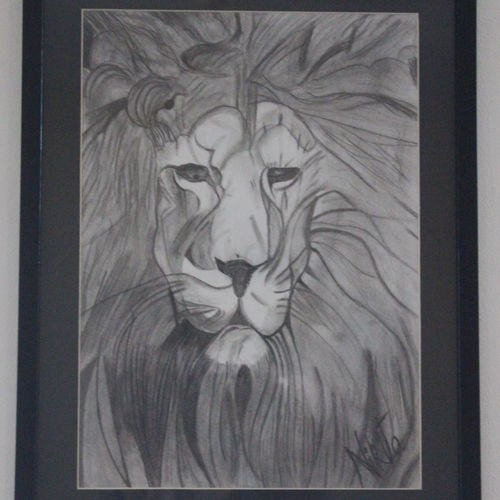 humble lion , 13 x 17 inch, nikita atreya,paintings for dining room,paintings for living room,paintings for office,paintings for hotel,illustration drawings,portrait drawings,realism drawings,paintings for dining room,paintings for living room,paintings for office,paintings for hotel,thick paper,charcoal,graphite pencil,13x17inch,GAL0560813538