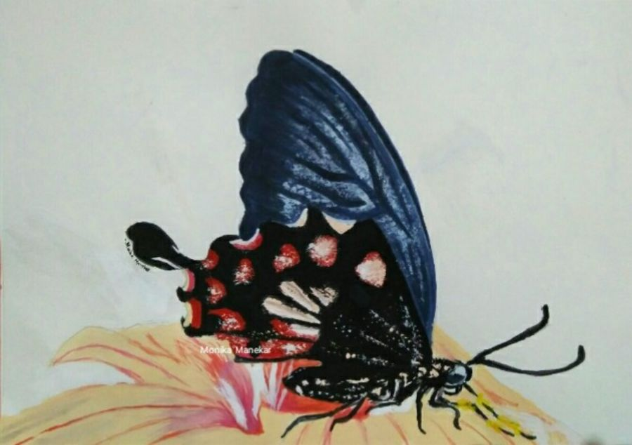 butterfly on flower nature, 6 x 8 inch, monika  manekar,flower paintings,nature paintings,animal paintings,love paintings,thick paper,acrylic color,6x8inch,GAL0570013663Nature,environment,Beauty,scenery,greenery