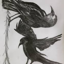 the crows, 12 x 17 inch, sandipan  ghosh,paintings for kids room,paintings for kids room,modern drawings,paper,pencil color,12x17inch,GAL0606714339