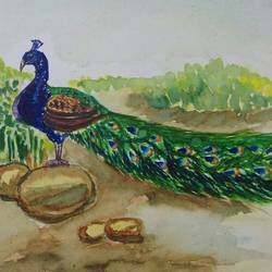 the elegant peacock , 12 x 11 inch, samyukta s,wildlife paintings,paintings for living room,thick paper,watercolor,12x11inch,GAL06071477