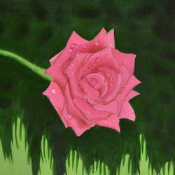 rose and dewdrops, 12 x 7 inch, suchitra tata,paintings,flower paintings,paintings for dining room,paintings for living room,paintings for office,paintings for hotel,paper,oil,12x7inch,GAL0288614875