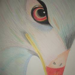 eagle, 12 x 17 inch, rakhi pravin,drawings,figurative drawings,thick paper,pencil color,12x17inch,GAL0649215019