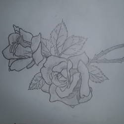 rose, 8 x 13 inch, disha singh,drawings,paintings for kids room,fine art drawings,paintings for kids room,drawing paper,pencil color,8x13inch,GAL0668715206