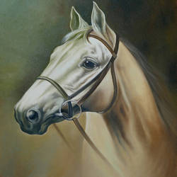 horses portrait, 18 x 24 inch, augustine devotta,paintings,horse paintings,paintings for living room,paintings for office,paintings for hotel,canvas,oil,18x24inch,GAL0695415727