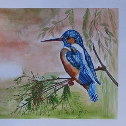 the kingfisher in water color, 14 x 11 inch, soma pradhan,paintings,wildlife paintings,paintings for hotel,paintings for school,paintings for hospital,paintings for hotel,paintings for school,paintings for hospital,brustro watercolor paper,watercolor,14x11inch,GAL064515773