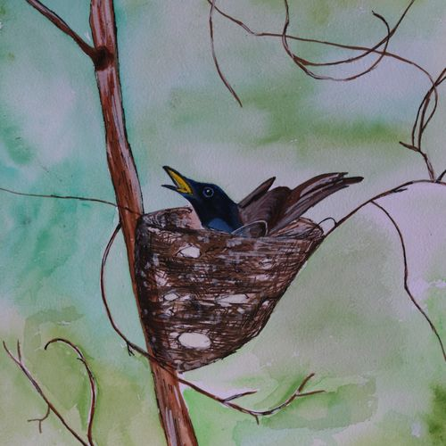 the asian paradise fly catcher, 14 x 11 inch, soma pradhan,paintings,wildlife paintings,paintings for hotel,paintings for school,paintings for hospital,paintings for hotel,paintings for school,paintings for hospital,brustro watercolor paper,watercolor,14x11inch,GAL064515774
