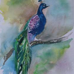 the peacock in water color, 14 x 11 inch, soma pradhan,paintings,wildlife paintings,paintings for hotel,paintings for school,paintings for hospital,brustro watercolor paper,watercolor,14x11inch,GAL064515775
