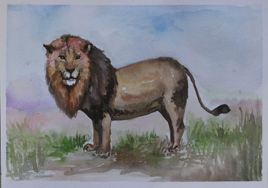 the asiatic lion, 14 x 11 inch, soma pradhan,paintings,wildlife paintings,paintings for kids room,paintings for hotel,paintings for kitchen,paintings for school,paintings for hospital,brustro watercolor paper,watercolor,14x11inch,GAL064515776