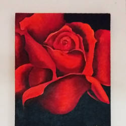 canvas, 12 x 15 inch, renu b,paintings,flower paintings,paintings for living room,paintings for living room,canvas,acrylic color,12x15inch,GAL0708615904