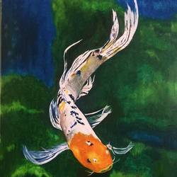 japanese koi fish, 26 x 30 inch, sameera masoodi,wildlife paintings,minimalist paintings,photorealism paintings,photorealism,realism paintings,paintings for dining room,paintings for living room,paintings for kids room,paintings for hotel,paintings for kitchen,paintings for dining room,paintings for living room,paintings for kids room,paintings for hotel,paintings for kitchen,paintings for office,canvas,oil,26x30inch,GAL0721616058,japanese koi fish,water,grass