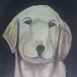 a labrador, 12 x 16 inch, amit kumar sinha,paintings,animal paintings,dog painting,paintings for dining room,paintings for living room,paintings for bedroom,paintings for office,paintings for kids room,paintings for hotel,paintings for kitchen,paintings for school,paintings for hospital,canvas,oil,12x16inch,GAL0691316157