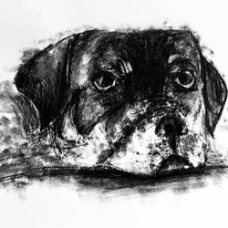 the best friend, 8 x 12 inch, swati vohra,drawings,expressionist drawings,figurative drawings,ivory sheet,charcoal,8x12inch,GAL0728216185