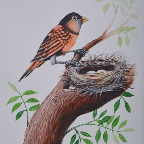 bird painting 31, 9 x 12 inch, santosh patil,paintings,nature paintings,love paintings,paintings for dining room,paintings for living room,paintings for bathroom,paintings for kids room,paintings for hotel,paintings for kitchen,paintings for school,paintings for hospital,drawing paper,poster color,9x12inch,GAL0178116400heart,family,caring,happiness,forever,happy,trust,passion,romance,sweet,kiss,love,hugs,warm,fun,kisses,joy,friendship,marriage,chocolate,husband,wife,forever,caring,couple,sweetheartNature,environment,Beauty,scenery,greenery