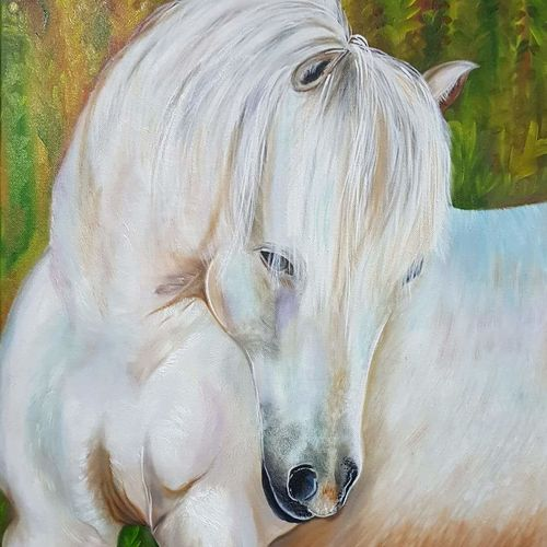 white horse, 18 x 24 inch, malti mukhi,paintings,horse paintings,paintings for dining room,paintings for living room,paintings for bedroom,paintings for office,paintings for hotel,paintings for school,paintings for hospital,canvas,oil,18x24inch,GAL0579516560