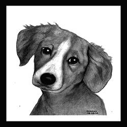 puppy, 7 x 10 inch, shivkumar  menon,drawings,portrait drawings,paintings for living room,thick paper,graphite pencil,7x10inch,GAL098616651