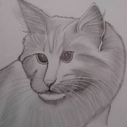 cute cat, 14 x 10 inch, ranjana langyan,paintings for kids room,expressionist drawings,paintings for kids room,paper,pencil color,14x10inch,GAL0296616784