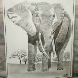 elephant, 42 x 30 inch, sakina attarwala,drawings,paintings for hotel,abstract drawings,paintings for hotel,drawing paper,graphite pencil,42x30inch,GAL057716851