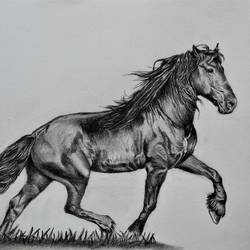 horse, 8 x 12 inch, saurabh  kumar,drawings,paintings for dining room,paintings for living room,paintings for bedroom,paintings for office,paintings for hotel,paintings for kitchen,paintings for hospital,figurative drawings,fine art drawings,portrait drawings,realism drawings,paintings for dining room,paintings for living room,paintings for bedroom,paintings for office,paintings for hotel,paintings for kitchen,paintings for hospital,drawing paper,charcoal,pencil color,8x12inch,GAL0392617045