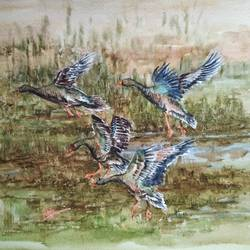 birds in a flight, 15 x 11 inch, ram mohan e,paintings,nature paintings,animal paintings,paintings for living room,paintings for office,paintings for kids room,paintings for hotel,paintings for school,fabriano sheet,watercolor,15x11inch,GAL069717061Nature,environment,Beauty,scenery,greenery