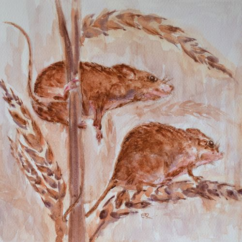 harvest mouse, 15 x 11 inch, ram mohan e,paintings,wildlife paintings,nature paintings,animal paintings,paintings for living room,paintings for kids room,paintings for school,fabriano sheet,watercolor,15x11inch,GAL069717143Nature,environment,Beauty,scenery,greenery