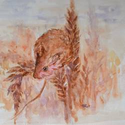 harvest mouse, 15 x 11 inch, ram mohan e,paintings,wildlife paintings,nature paintings,animal paintings,paintings for living room,paintings for kids room,paintings for school,fabriano sheet,watercolor,15x11inch,GAL069717144Nature,environment,Beauty,scenery,greenery